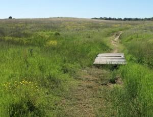 SRP-Prairie Grass